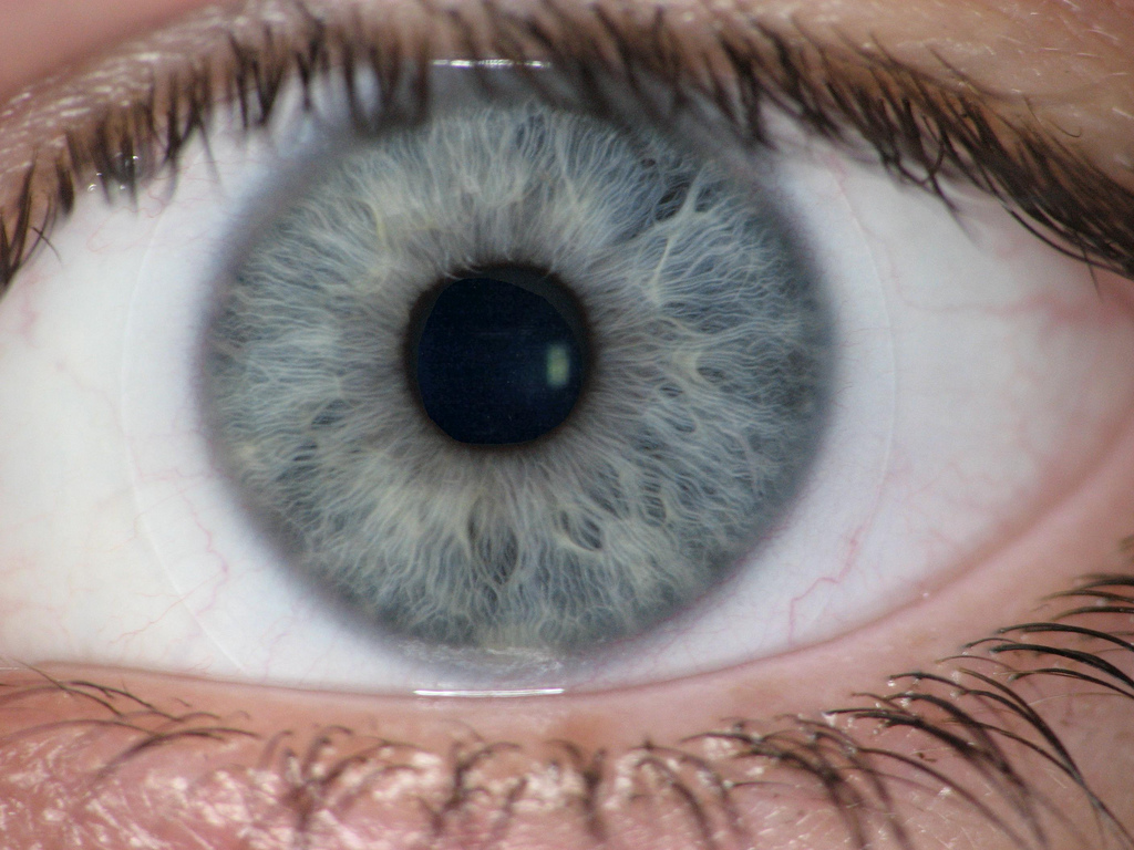 blue eye - close-up view
